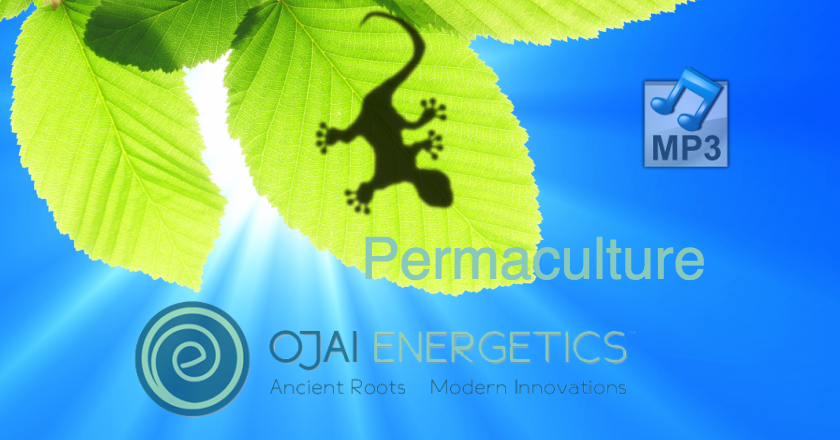 Permaculture and Business Discussion