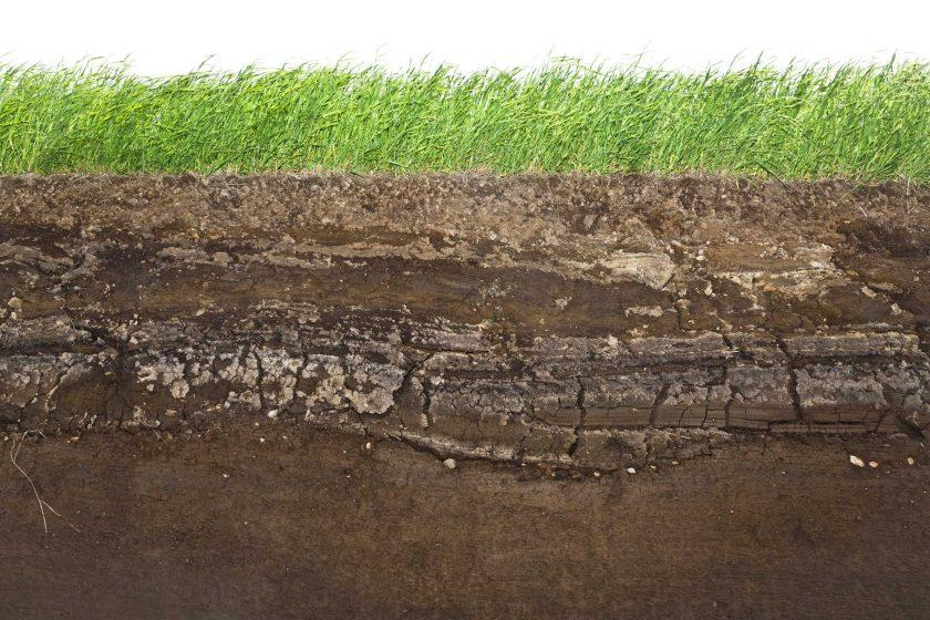 hemp_soil