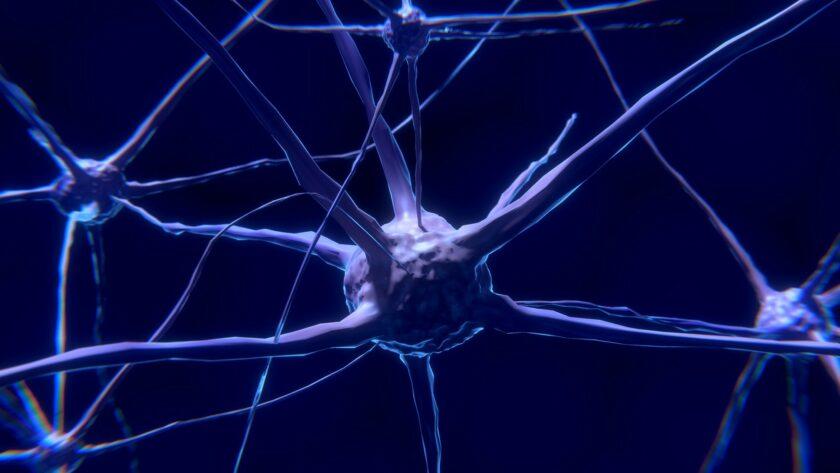 cbd_endocannabinoid_nerve