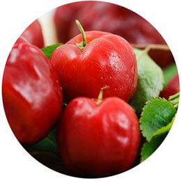 acerola cherry in Ojai Energetics full spectrum hemp oil