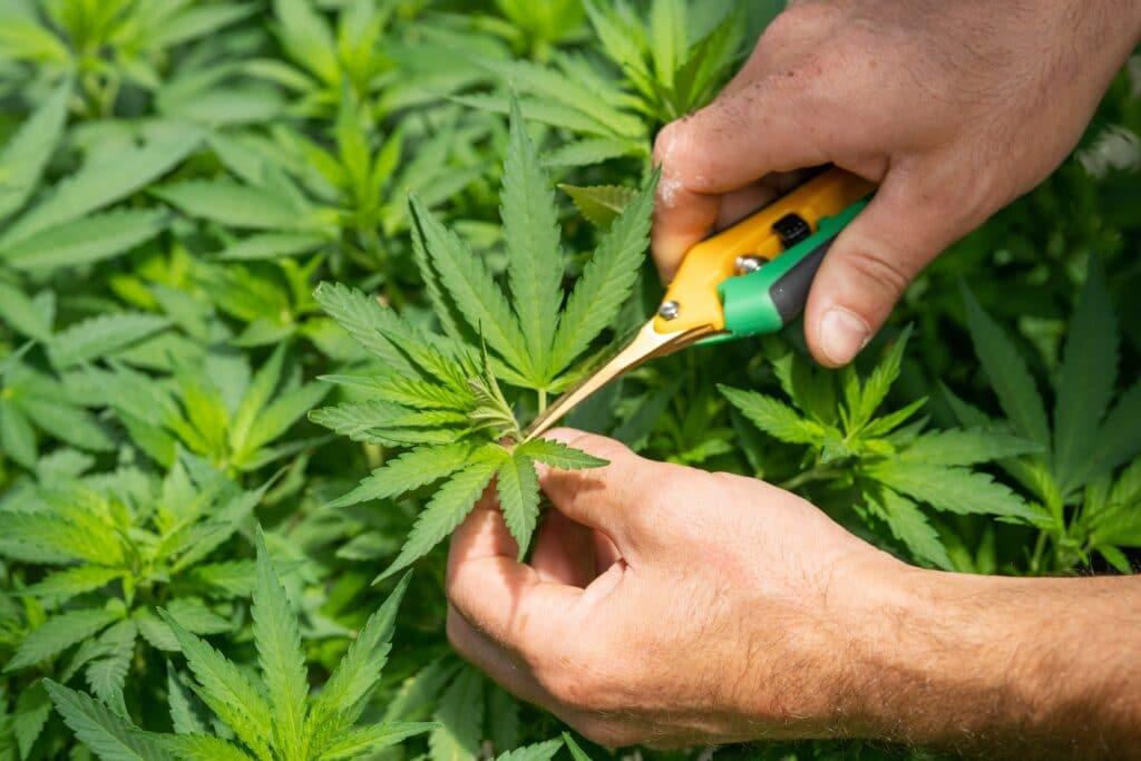 How Cannabinoids and Terpenes Work with Ojai Energetics