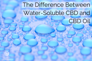 What is the difference between water-soluble CBD and CBD oil?