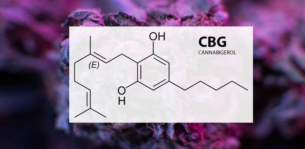 What is CBG? Is Cannabigerol The Next Big Cannabinoid?