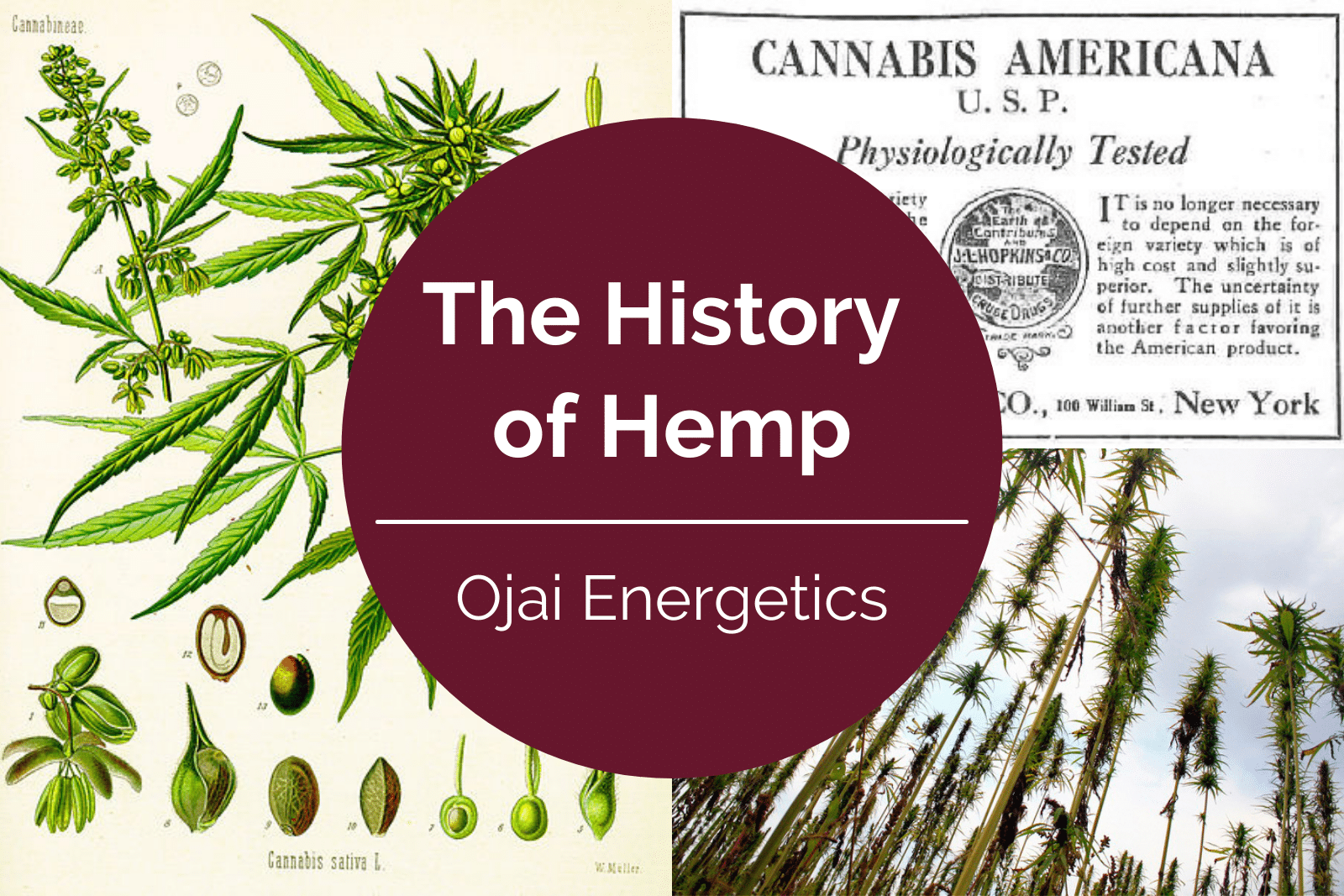 The History of Hemp: Where and When was Hemp First Used?